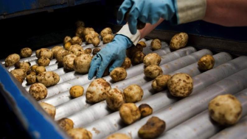 ارتفاع المبيعات الصناعية 1,5% بدفعٍ من الأخشاب والمنتجات الكيميائية والغذائية